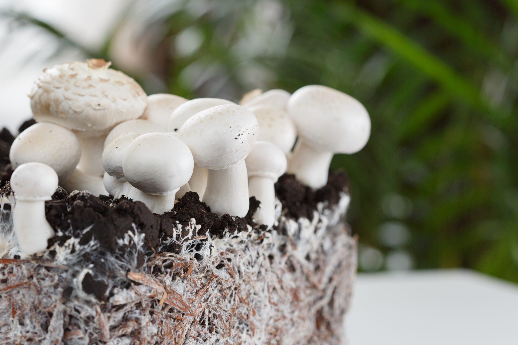 Mycelium: Man's Unexpected Best Friend